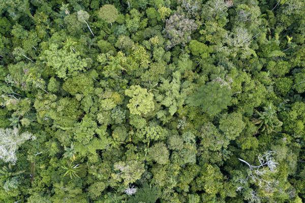 As florestas tropicais apresentam grande biodiversidade.