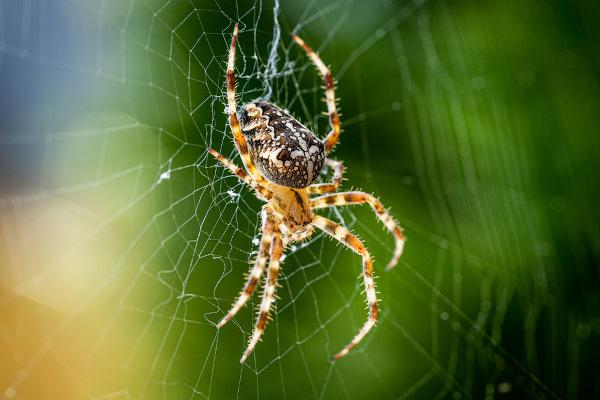 Os aracnídeos possuem quatro pares de patas.