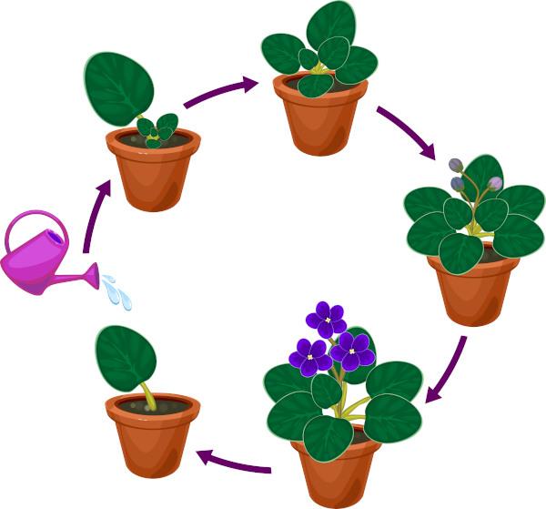 Na propagação vegetativa, partes vegetativas de uma planta são usadas com a finalidade de propagação.