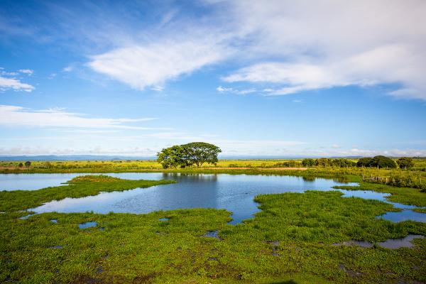 Planícies alagadas no Pantanal