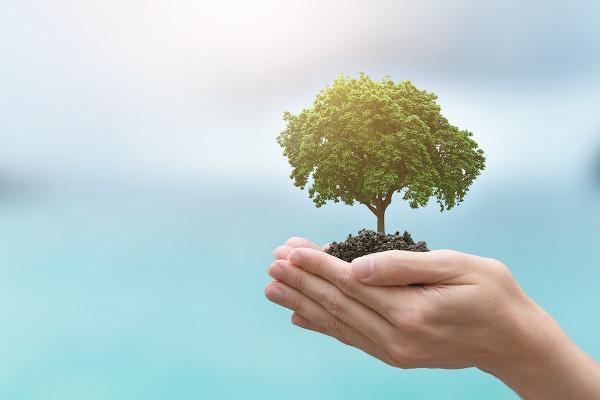 O Dia da Árvore é comemorado no dia 21 de setembro.