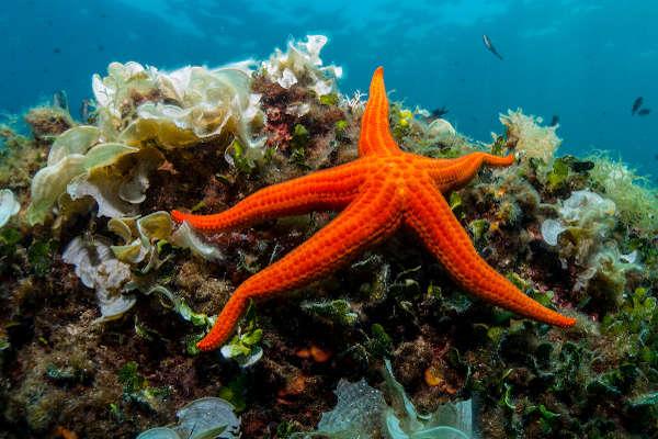 As estrelas-do-mar são representantes da Classe Asteroidea e apresentam tipicamente cinco braços.