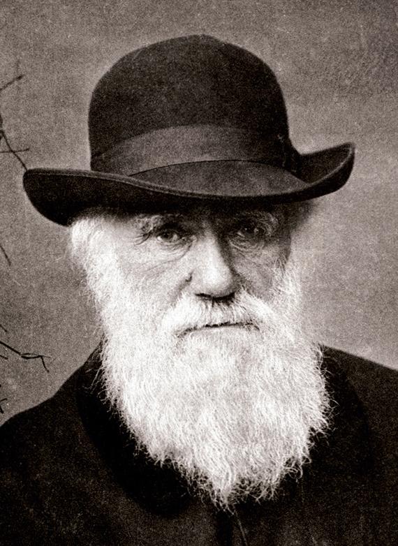 Darwin foi responsável por desenvolver consideravelmente os estudos sobre a evolução.