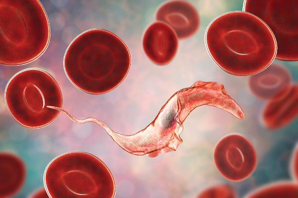 O Trypanosoma cruzi é um protozoário que se locomove por meio de flagelos.