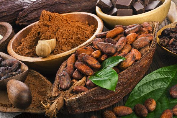 As sementes do cacau são usadas para a fabricação de cacau em pó, chocolate e manteiga de cacau.