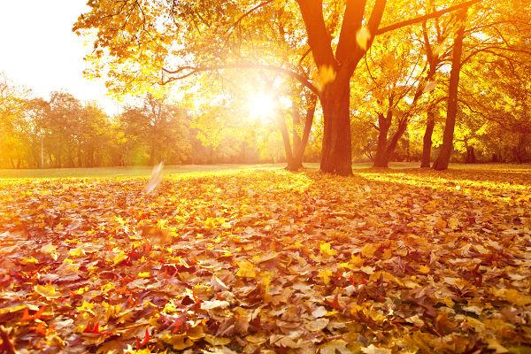 A coloração âmbar da cobertura vegetal e a queda das folhas são representativas das mudanças que ocorrem durante o outono.
