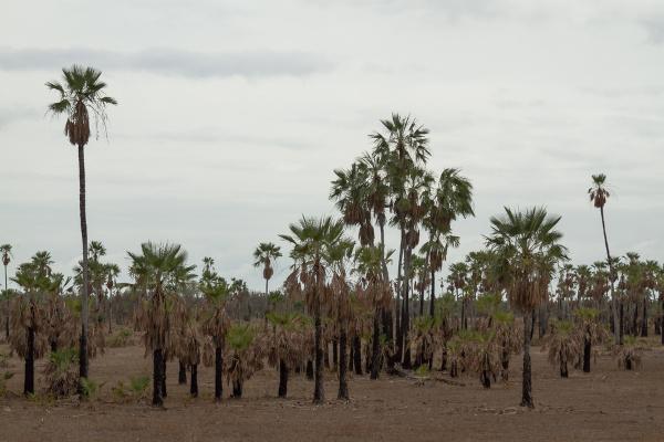 A Mata dos Cocais é um dos domínios encontrados no Piauí.