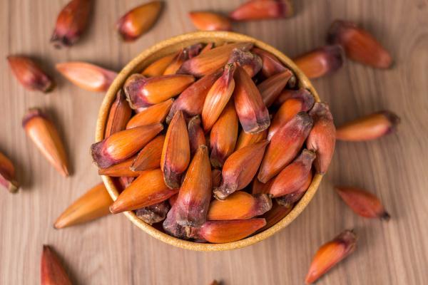 Pinhão é um dos alimentos típicos do Paraná.