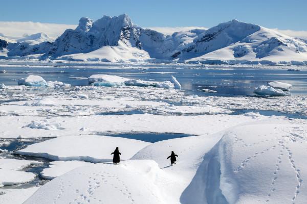 Paisagem polar congelada e com pinguins caminhando.