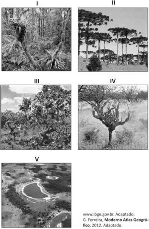Imagem de cinco tipos de vegetação.