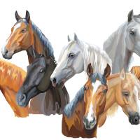 ilustração cavalo