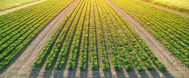 Monocultura de soja