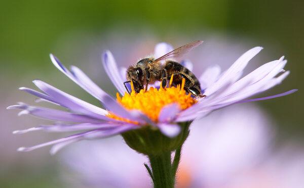 As abelhas e plantas estabelecem uma relação mutualística.