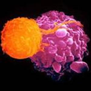 Qualquer pessoa pode desenvolver algum tipo de câncer ao longo da vida