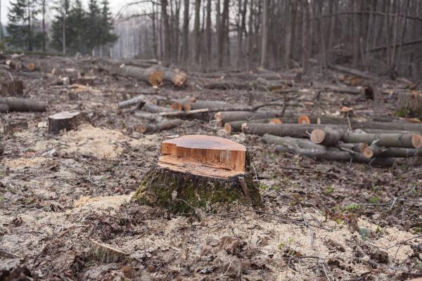 A retirada da cobertura vegetal é um dos maiores problemas ambientais no mundo.