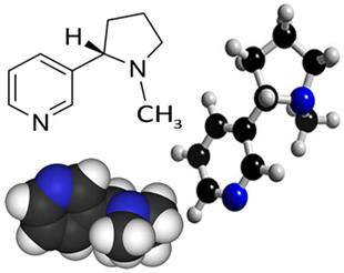 Fórmula estrutural da nicotina