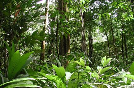 Floresta Amazônica é rica em biodiversidade.
