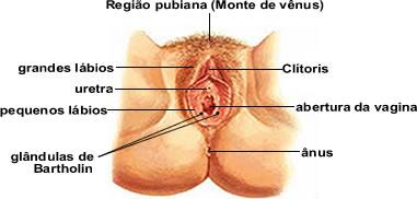 parte superior sexo pequeño cerca de Cádiz