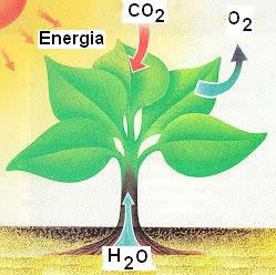 Atividades sobre fotossintese para 3 ano 53