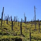 Paisagem com árvores sem folhas