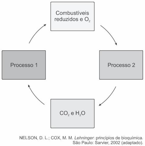 Esquema ilustrativo do ciclo do carbono — questão Enem 2018