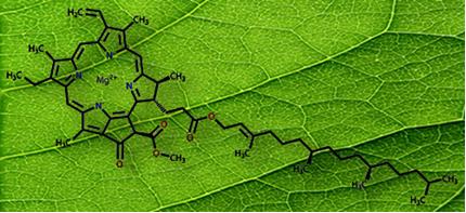 Complexa molécula do pigmento clorofila