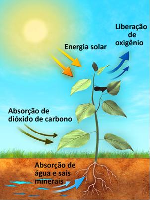 Esquema de processo de fotossíntese