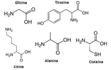 Exemplos de aminoácidos encontrados nas proteínas