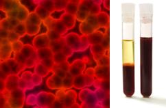 Imagem microscópica e fases do sangue