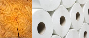 A celulose presente na madeira é usada para se produzir papel