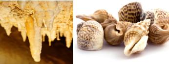 As estalactites e as conchas são constituídas por carbonato de cálcio