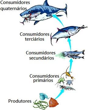Observe essa cadeia alimentar com cinco níveis tróficos