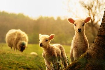 Os animais fazem parte do reino Animalia