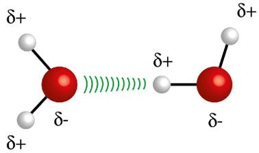O átomo de hidrogênio (esfera branca) de uma molécula interage com o oxigênio (esfera vermelha) de outra molécula de água