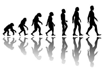 Observe o esquema de evolução humana acima