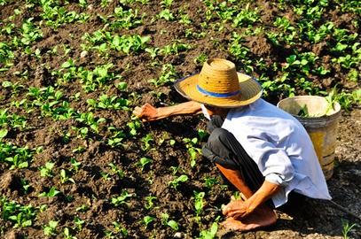 Na agricultura extensiva, é comum o uso de mão de obra sem qualificação