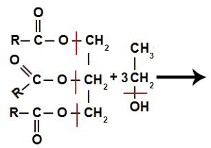 Quebra de ligações nos reagentes de uma reação de transesterificação