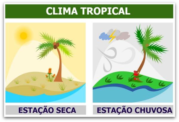 Uma característica marcante do clima tropical é a existência de duas estações do ano, uma seca e outra chuvosa