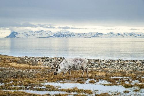 Em algumas regiões de clima polar, em um curto período de verão, surge a tundra, uma vegetação rasteira