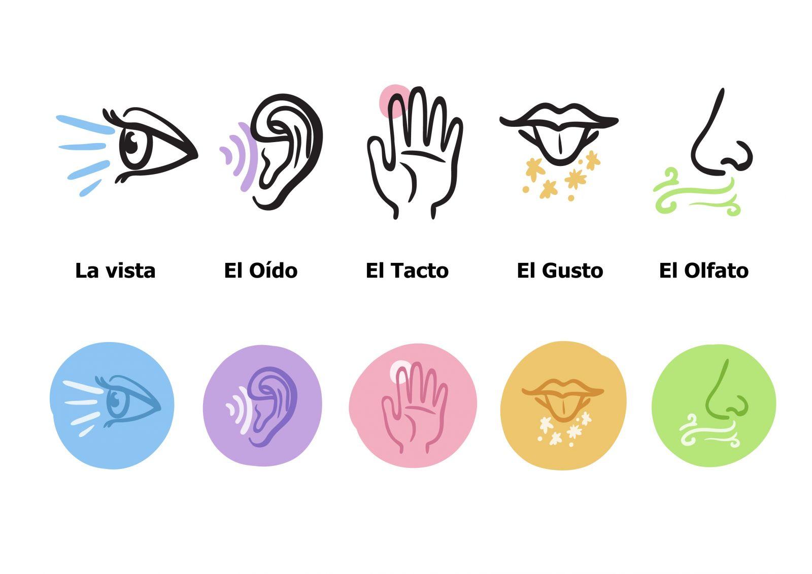 O nosso corpo é composto por cinco sentidos, que fazem parte do nosso sistema sensorial
