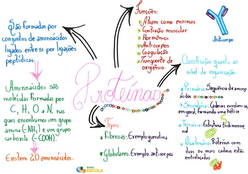 Proteínas Mapa Mental Resumo Função Tipos Brasil Escola