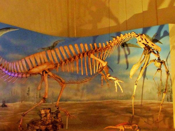 Sala dos dinossauros, no Museu Nacional. (Foto: Acervo pessoal da Dra. Elysiane de Barros Marinho)