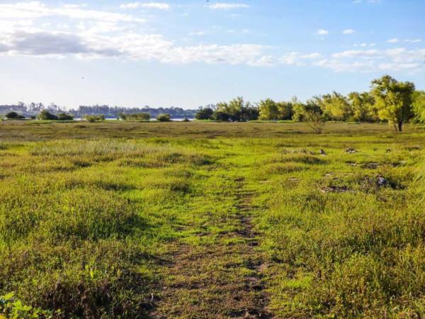 O Bioma Pampa é caracterizado por ter uma vegetação rasteira composta por gramíneas e arbustos.