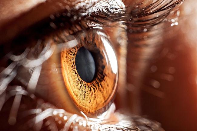 O olho humano é um complexo instrumento óptico.