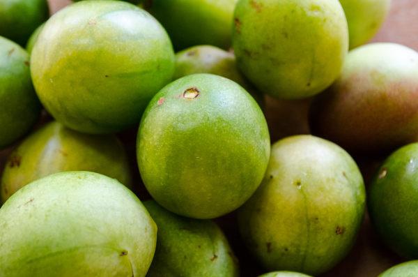 O umbu é uma fruta típica do Nordeste brasileiro.