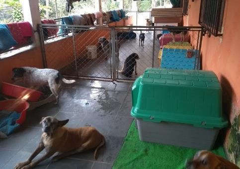 Local destinado para a acomodação de cães que necessitam de cuidados diferenciados na Acãochego.
