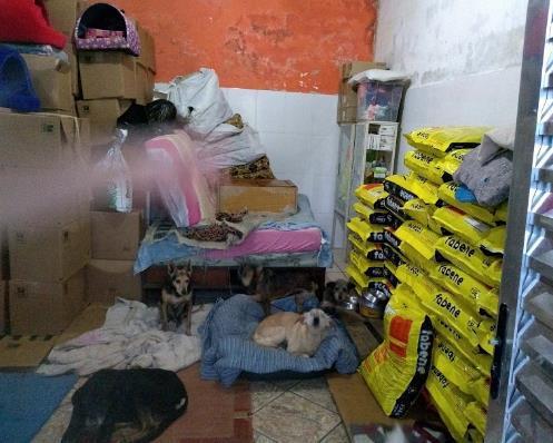 Cães acomodados no estoque da Acãochego