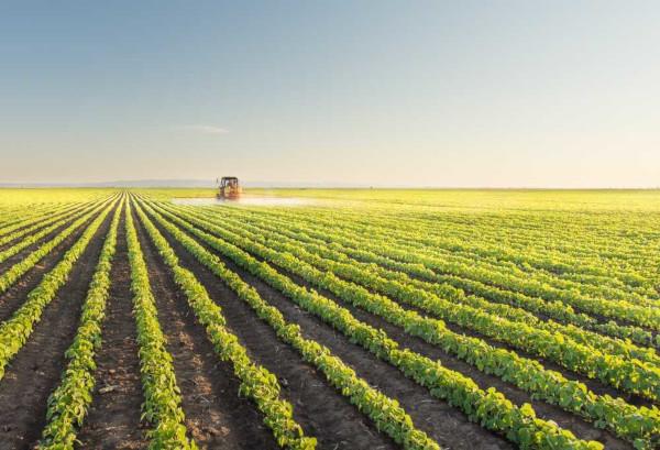 A agricultura comercial é realizada em grandes propriedades rurais, com produção voltada para a exportação.