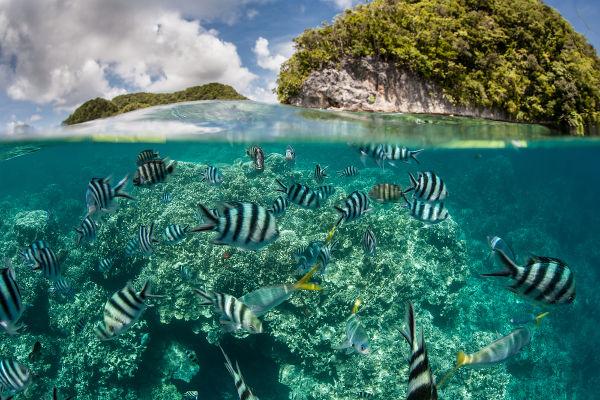 A área da Biologia que estuda a relação dos seres vivos entre si e com o meio é chamada de Ecologia.