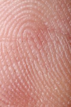 Extremidades externa do dedo